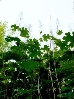 ecologische tuin7